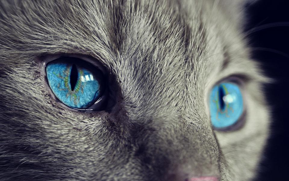 Gatos sentido