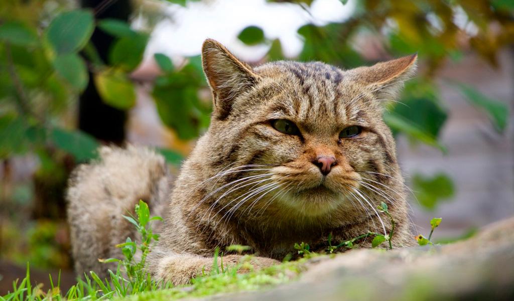 comportamiento de gatos salvajes