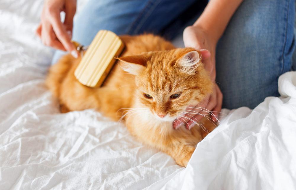 Consejos para peinar a tu gato