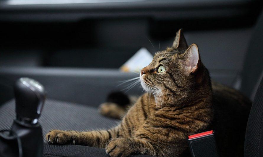 Mochila para gatos