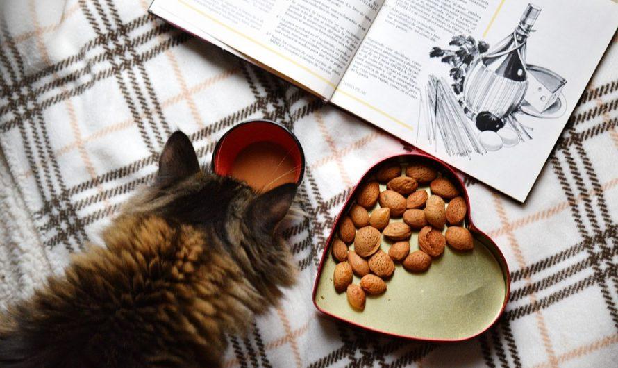 Comida gatos