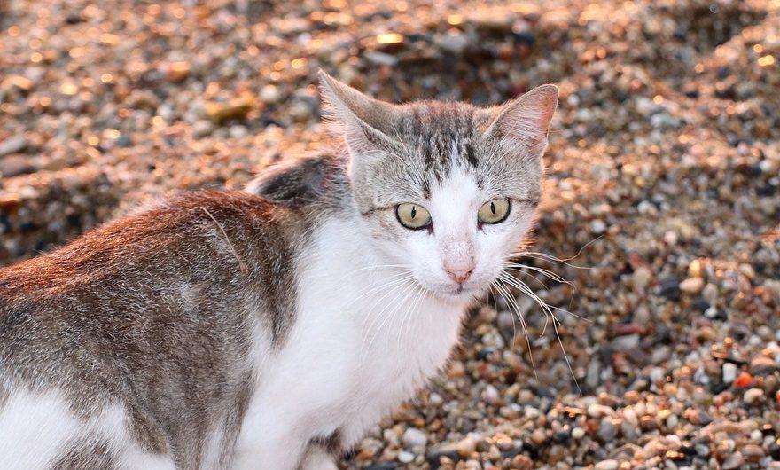Caja para gatos