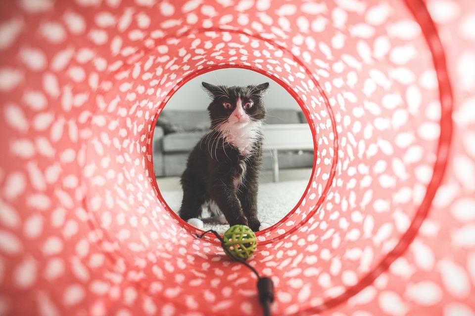 Parque para gatos