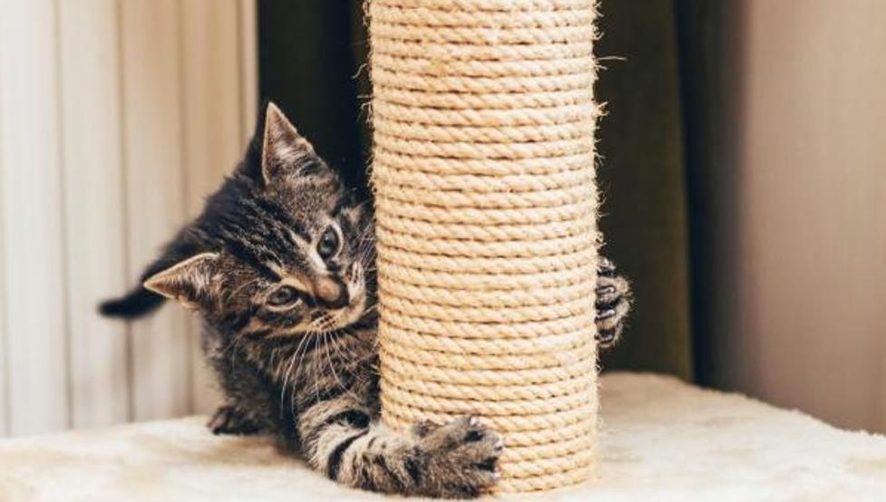 Gatito rasgando su rascador de gatos
