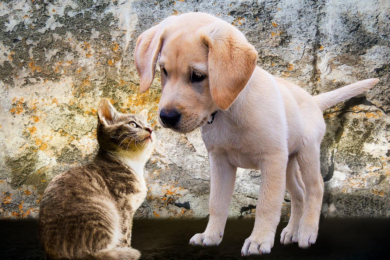 Razas de Perros medianos para vivir con gatos