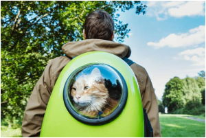 Mochila para gato