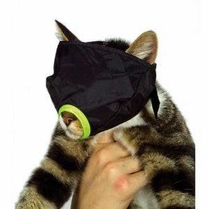 bozal para gatos 2