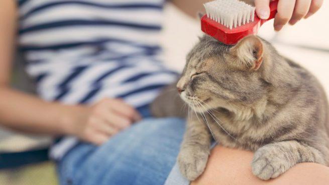 cepillos-para-gatos