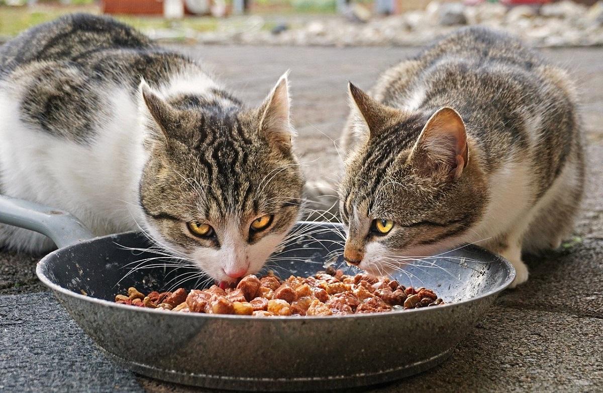 comida humeda para gatos 2