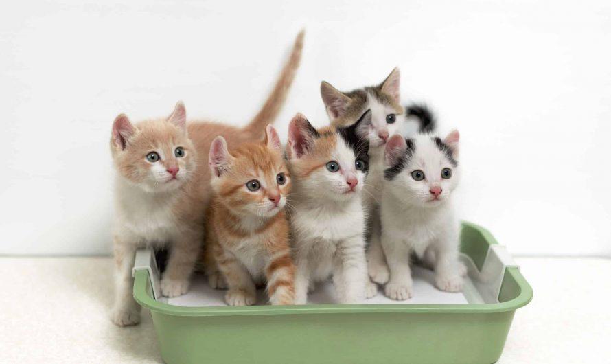 Arenero para gatos baratos