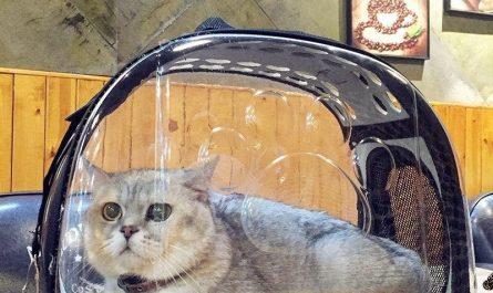 bolsos para gatos