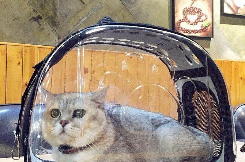 Bolso para gatos