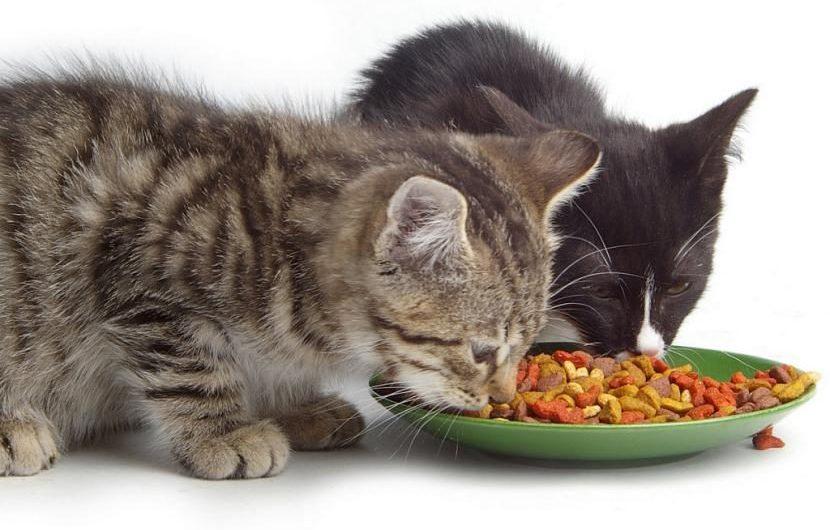 Pienso gatos