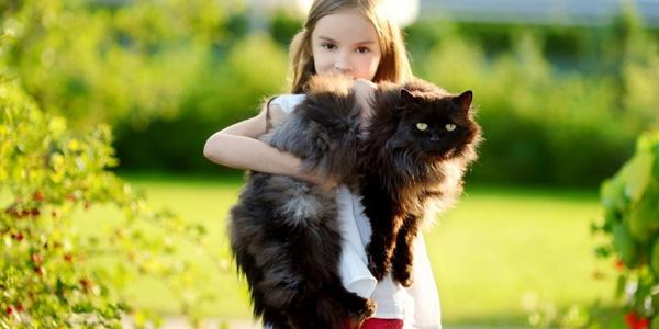 gatos grandes razas
