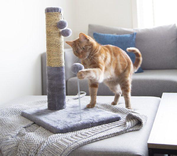 Accesorios de gatos