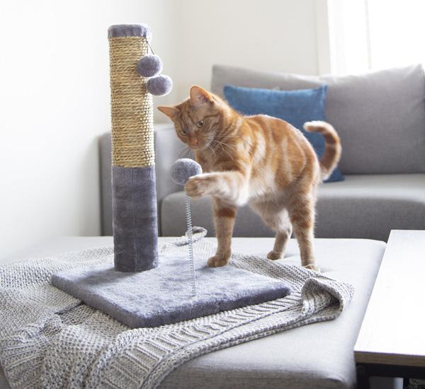 comprar accesorios de gatos