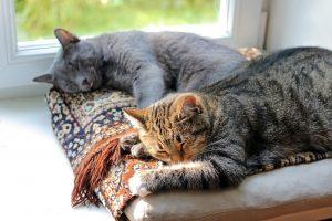 pienso para gatos esterilizados