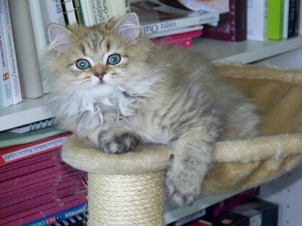 Juguetes para gatos persas baratos y educativos