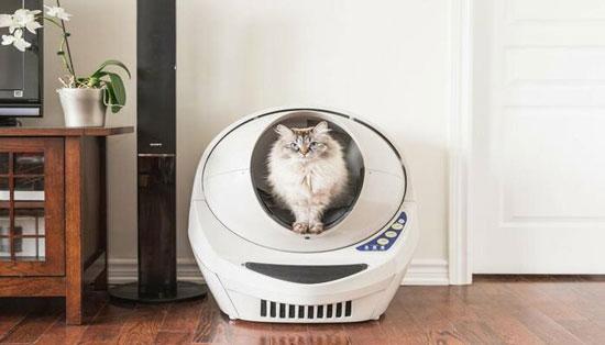 Caja de arena para gatos buena y barata