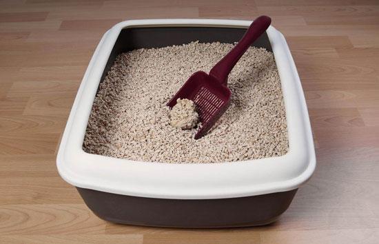 que caja de arena comprar