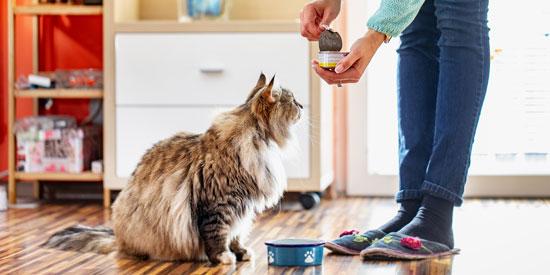 Alimento para las diferentes razas de gatos: ¿Cuál es el mejor?
