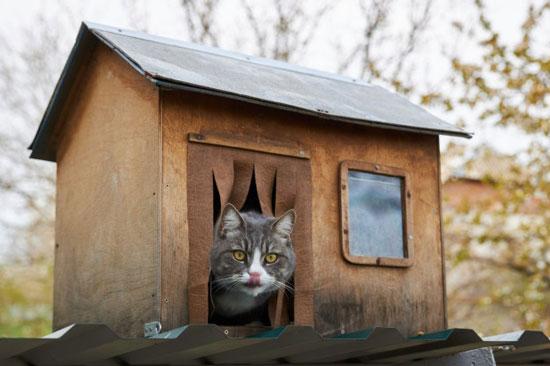 como elegir una casa para gatos