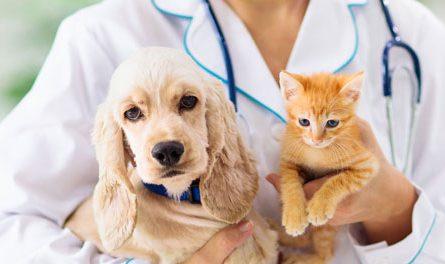 cómo contratar Seguros para mascotas