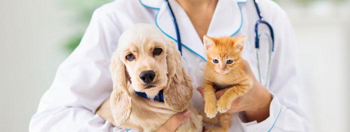 Seguros para mascotas, ¿Cómo contratarlos?