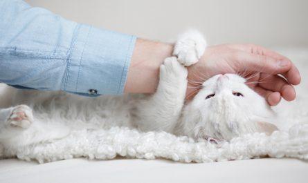 Cómo educar a un gato para que no muerda