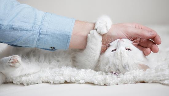 ¿Tu gato muerde? ¿Cómo evitarlo?