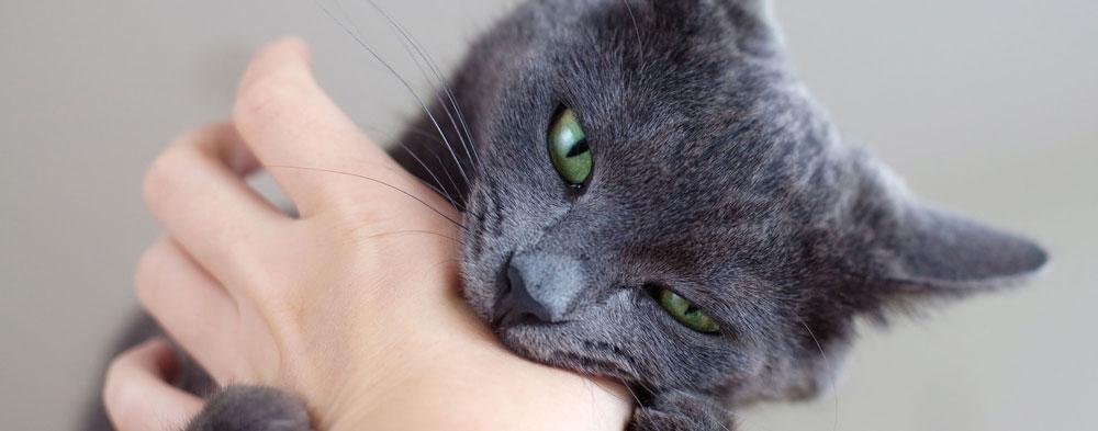 cómo evitar que mi gato me muerda
