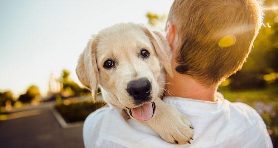Contratar seguros para mascotas