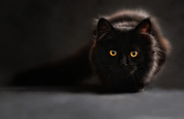 Significado de soñar con un gato negro