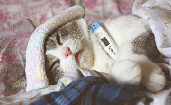 enfermedades más frecuentes de los gatos