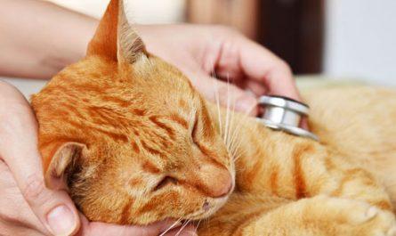 Qué enfermedades tienen los gatos