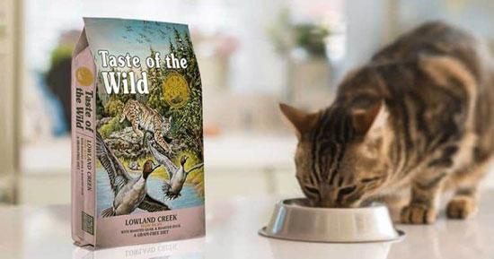 variedades y marcas de alimentos para gatos